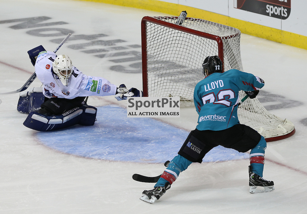 NOTTINGHAM, UNITED KINGDOM 04 APRIL 2015: Darryl Lloyd of Belfast Giants tries to control the puck during the Elite League Play Off Semi Final game between Coventry Blaze and Belfast Giants at the National Ice Centre, Nottingham, on April 4, 2015 in Nottingham, England. (Photo by Michael Poole)