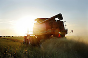 Custom harvester Justin Spielman from Newkirk, Oklahoma combines a field of canola near El Reno as the sun sets on the horizon.