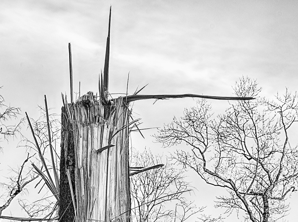 This tree was snapped in hurricane Sandy storm.  The shards remaining at the top looked random and expressive.  The setting sun helped to bring out many of the details.