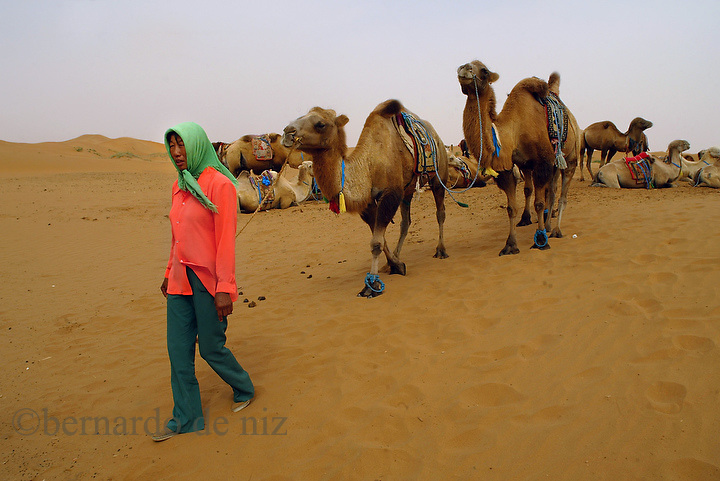 A Mongolian herdswomen takes some camels to a ride at the Moon Lake resort complex in the Gobi desert at the Inner Mongolian Autonomous region in China. Aug-28-2006./Photo: Bernardo De Niz