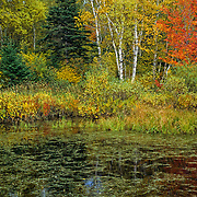 Fall colors. Saint Adele, Quebec. Canada.