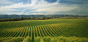 Rolling Hills of Vineyards