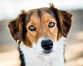 Adoptable Dogs - Nov 12, 2016