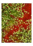 Wasserklee, trèfle d'eau. ZEICHEN   SIGNES Cartes postales   Postkarten   postcards format 10 x 15 cm, Fr. 2.- / pce