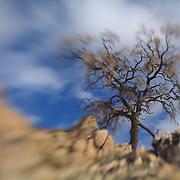 Desert Oak Large Rock Hill - Full Clouds - Lensbaby
