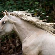 Equine Spirit in Color
