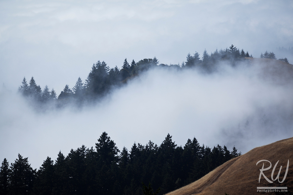 Foggy Coastal Marine Layer Just Below Bolinas Ridge, Mount Tamalpais State Park, California