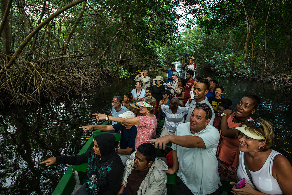 PORT OF SPAIN, TRINIDAD - FEBRUARY 14, 2017: Tourists excitedly point at a crab eating racoon spotted as they enjoy a bird-watching tour in Caroni Swamp wetlands, one of the best places in the country to spend time in nature. Nanan's runs daily boat tours (60TT) at 4 p.m.; that take two-and-a-half hours. Guides steer green-painted pontoons down the calm waterways of the reserve, stopping to point out the different types of mangroves that line the banks, as well as snowy egrets, herons of all different hues and, depending on the day, caimans, anteaters and snakes hanging from tree branches. The tour pauses before sunset for the startling sight of thousands of bright scarlet ibis (one of Trinidad's national birds) flying home to roost. PHOTO: Meridith Kohut for The New York Times