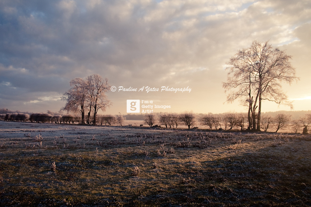 A heavy frost on the Suffolk Landscape, struck by the sunset.<br /> <br /> All posters are self-fulfilled. Prices vary depending on poster size and quality. Delivery is usually &pound;3.75.