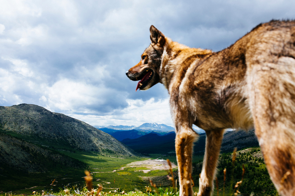 A dog and an epic mountainous landscape in northern Mongolia.