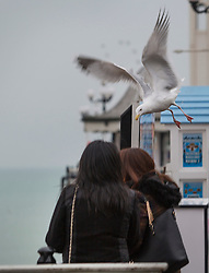 © Licensed to London News Pictures. 12/02/2017. Brighton, UK. A seagull dives towards two young woman who are eating a donut to steal food. A debate is currently underway to deal with the aggressive seagulls in Brighton and Hove. Photo credit: Hugo Michiels/LNP