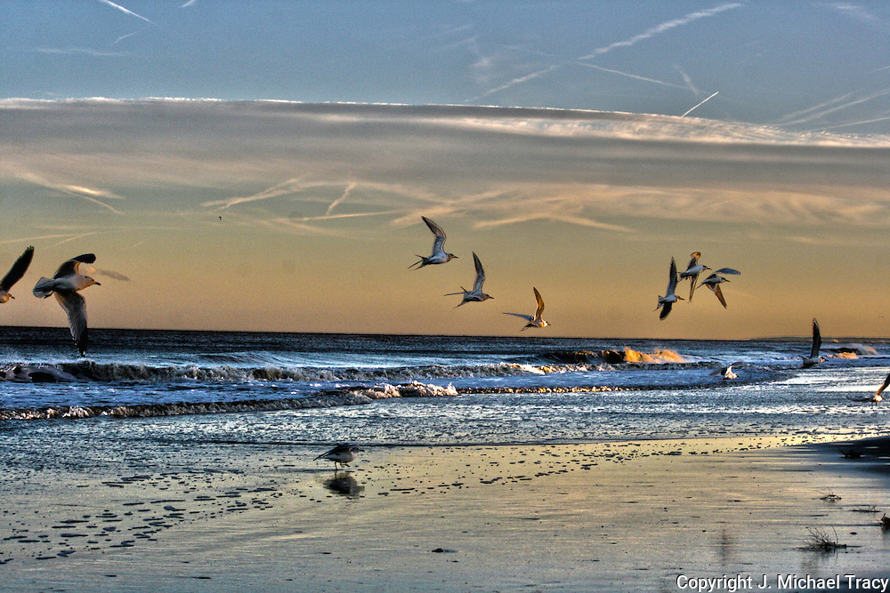 Painted, HDR, beach scene with seagulls and sunset.