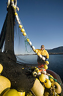 Matt Springer, a commercial fisherman, stacks corkline as the F/V Agave brings the seine onboard during the 2007 Sitka Herring Sac Roe fishery.