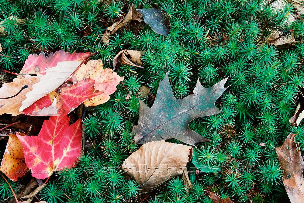 Leaves on fern