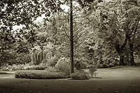 Buckingham Palace Royal Gardens Scene - London, England, 2017