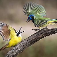 Perching Birds, part 1