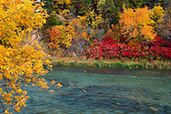 Fall turns the leaves of river-shore plants intense reds, yellows, and oranges.  Niobrara National Scenic River, Nebraska