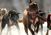 Hamilton, MA 011511 A team of dogs participating in htis year's Myopia Sled Dog Races at Appleton Farms in Hamilton on January 15, 2011. (Essdras M Suarez/ Globe Staff)/ MET