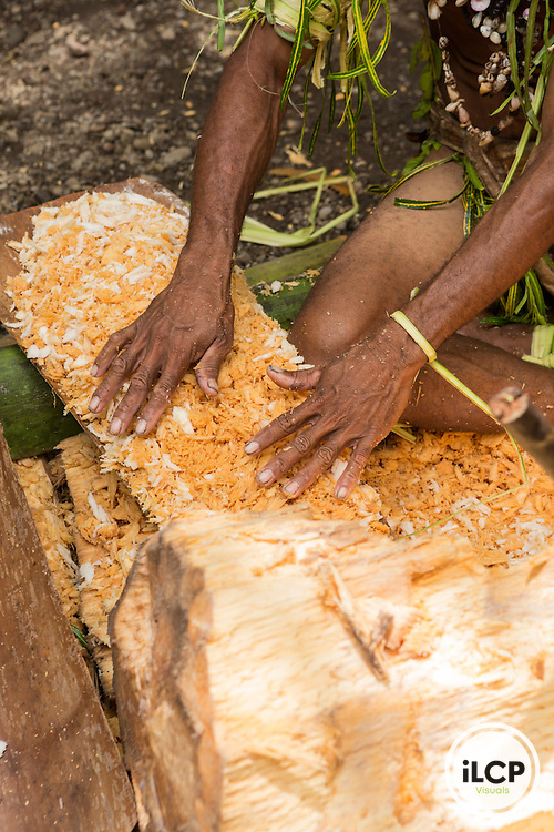 Traditionally dressed village members preparing sago.  Sago is made from a palm by chopping up the inside of the trunk into a pulp, rinsing it, then using the flour for sago pudding, bread or pancakes.  It is a staple for many tribes in Papua New Guinea. William Boga chopping sago.  Tufi area, Oro Province, Papua New Guinea