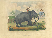 Antiquarian Print. Elephant and Mahout