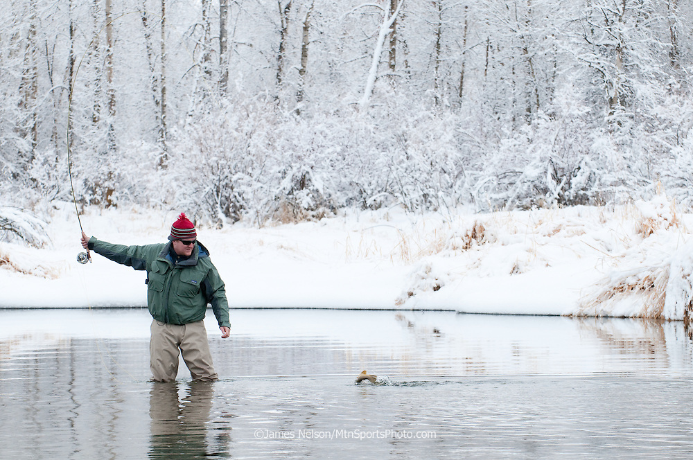 A fly fisherman brings a brown trout to hand during a winter day on the South Fork of the Snake River, Idaho.