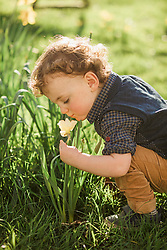 Young Boy Crouching Smelling Daffodil Flower in Park