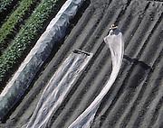 Gardener Near Mount Shosha, Japan