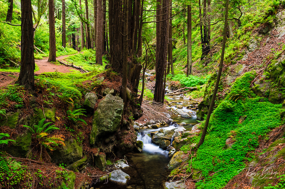 Hare Creek and redwoods, Lime Kiln State Park, Big Sur, California USA