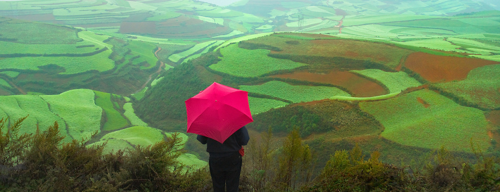 Tourist with red umbrella watch terraces of wheat and red soil in the mountain in morning mist, Yunnan, China