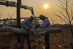 "SANTA CRUZ, BOLIVIA - AUGUST 24 : Two electrical local workers repair an electric power pole, where a forest fire took place in the Chiquitania region, the largest tropical dry forest eastern Bolivia on August 24, 2019. More than 750,000 hectares of forest have been turned into ashes during the latest days, according to the Bolivian Government. The fires have hit the country's Amazon side — with an 83% increase on last year. Brazil and Bolivia are under ""extreme risk"" from forest fires. MARCELO PEREZ DEL CARPIO / Anadolu Agency/ABACAPRESS.COM  