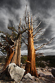 Yosemite and the Eastern Sierra