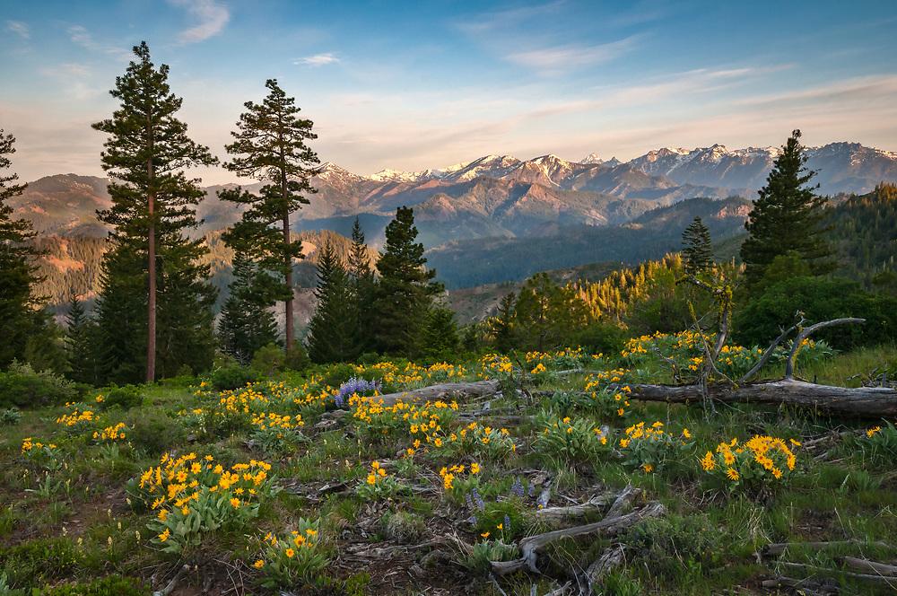 Lupine and Balsamroot, with Stuart Range mountains in background; Tronsen Ridge Trail above Blewett Pass, Washington.