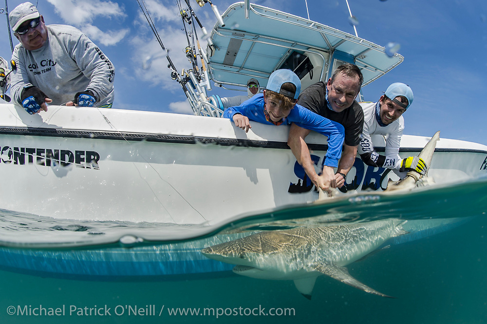 Fishermen release a Blacktip Shark, C. limbatus, after a brief fight on light tackle offshore Juno Beach, Florida, United States.