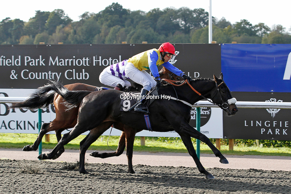 Pinotage and Justin Newman winning the 2.30 race