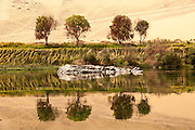 Trees and rocks reflected, River Nile, Egypt