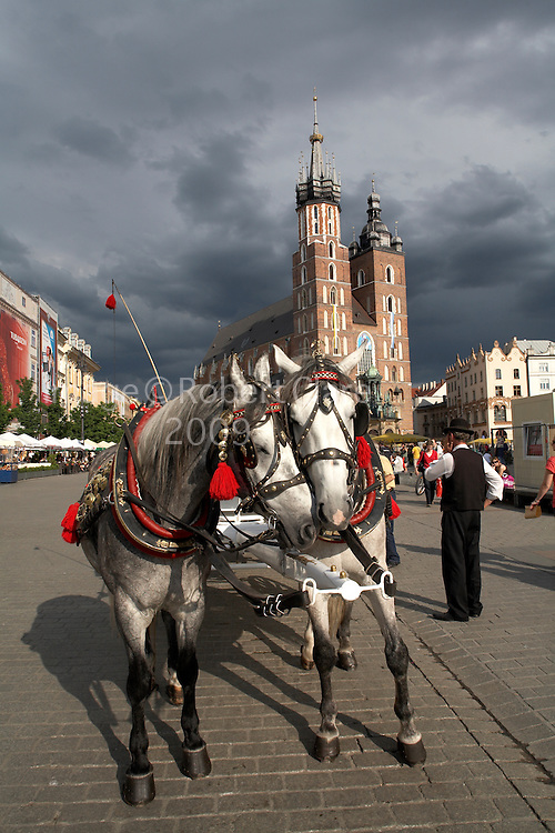 Eastern Europe Poland Malopolska Krakow Pair of Grey and White Carriage Horses in Rynek Glowny Church of St Mary's Background