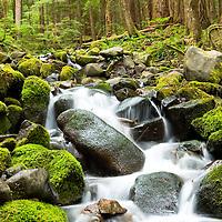 Creek off the Sol Duc Trail, Washington