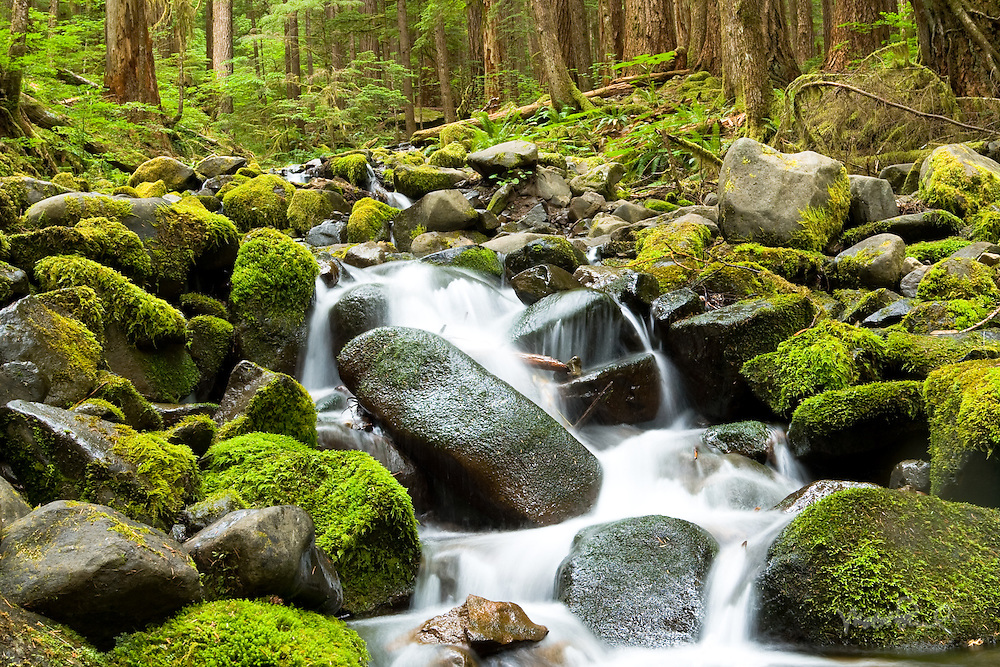 Creek off the Sol Duc Trail, Washington