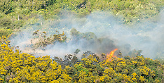 Wellington-Scrub fire at Cannons Creek