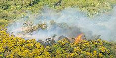 Wellington-Scrub fire at Cannons Creek