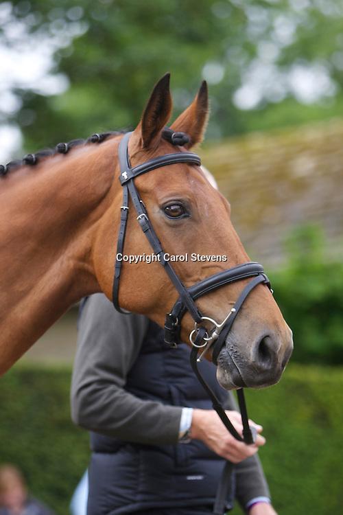 Bramham IHT 2012<br /> Final Inspection Equi-Trek CCI3* <br /> Gary Parsonage and Sligo Luckyvalier