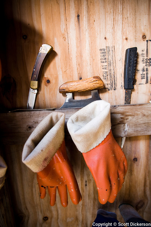 Gloves, fillet knives and an ulu, used for filleting and stripping salmon for hanging.