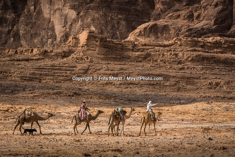 Sinai, Egypt, December 2018. A bedouin camel train caravan at Naqb El Hamadat, while hiking with the Tarabin Tribe through the Sinai Desert Coastal Ranges. The Sinai Trail is Egypt's 1st long distance hiking trail, running 230km from the Gulf of Aqaba to the top of the Sinai's highest mountain. It connects old trade, travel and pilgrimage routes through one of the Middle East's most iconic desert wildernesses and is managed by a cooperative of three Bedouin tribes. Photo by Frits Meyst / MeystPhoto.com