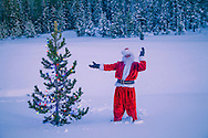 Santa Claus raises his arms beside a lone pine tree in the wilderness, decorated with Christmas lights.
