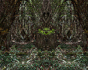 These images are all montages created by carefully choosing elements presented by the forest.