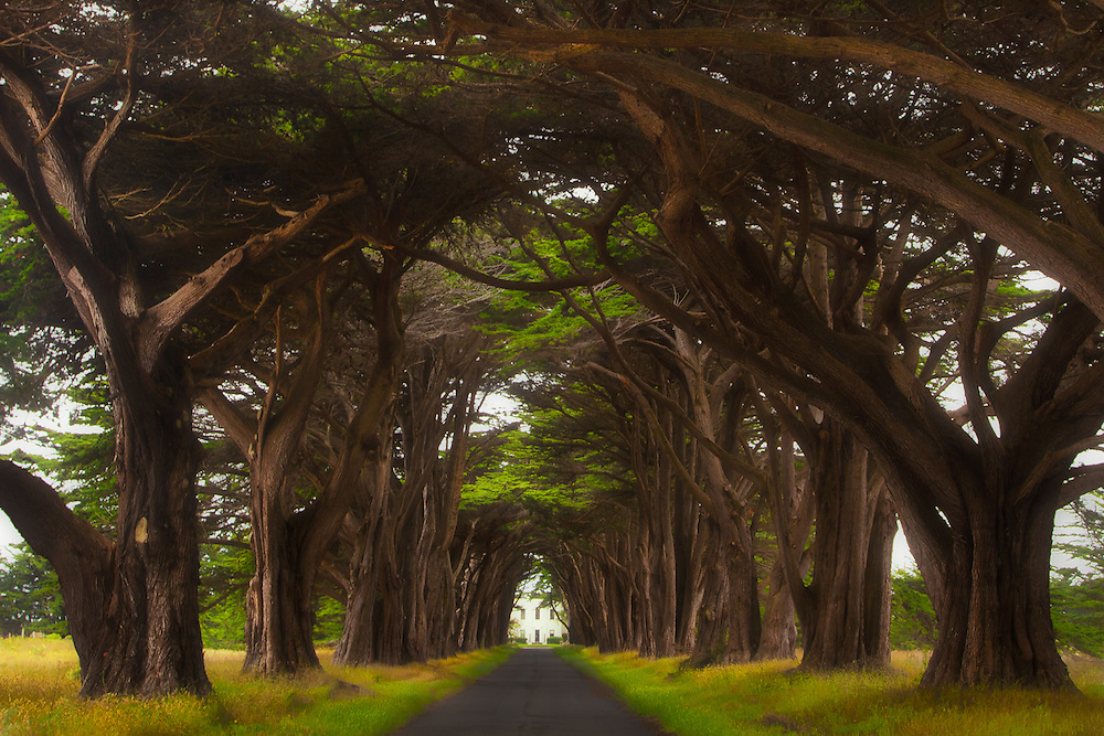 "The Monterey cypress ""tree tunnel"" in Point Reyes National Seashore, in northern California. At the end of the tunnel is Historic RCA Coast Station KPH, now a historical landmark."