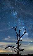 The Milky Way Galaxy rises over a lone tree along Skyline Drive, Shenandoah National Park, Virginia.