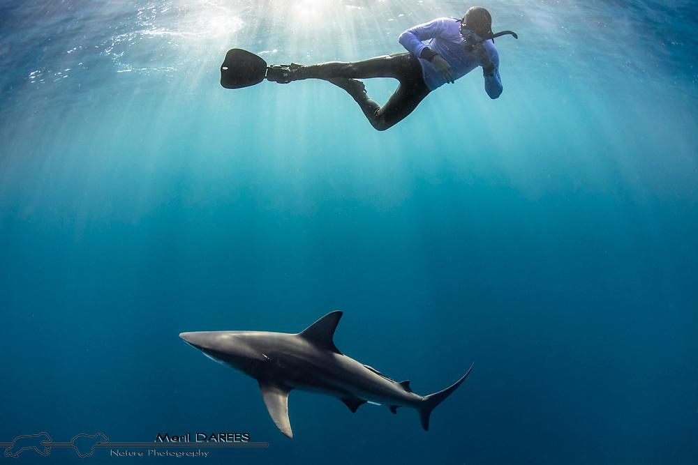 Bronze shark and snorkeller, South Africa