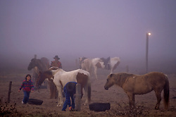 Tending to a string of horses in the morning fog in Texas