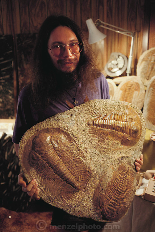 Fossil fraud: Christian Ratsch, a fossil expert, holding a stone containing three fossilized trilobites. The three fossils are, themselves, genuine, but had been bonded together to raise their collective price. An amateur collector may not have noticed this fraud. The trilobites are an extinct class of marine arthropods, which lived between the Cambrian Era (570 million years before present) and the Permian Era (230 million years BP). Although generally small in size, averaging 8cm in length, some specimens of 70cm length have been seen. MODEL RELEASED (1991)